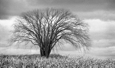 Photograph - Elm Fortress Bw by Jill Love