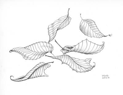 Drawing - Elm Leaf Elegance by Penrith Goff