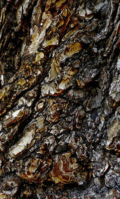 Photograph - Elm Tree Bark Pattern by Frank Tschakert