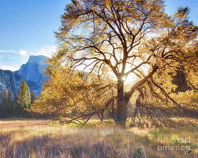 Photograph - Elm Tree Cooks Meadow by Anthony Michael Bonafede