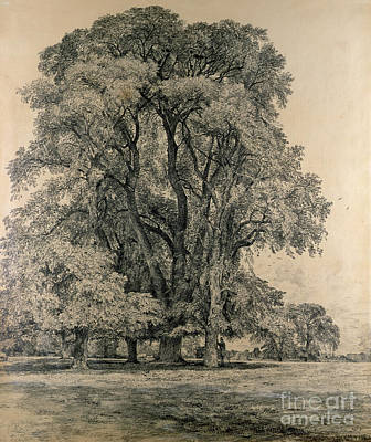 Study Drawing - Elm Trees In Old Hall Park by John Constable