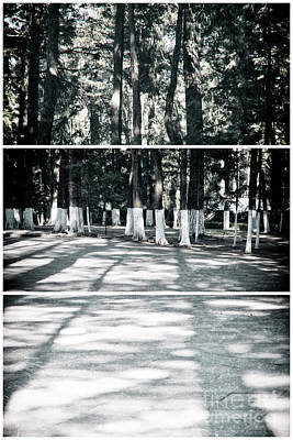 Photograph - Elongated Trees by Ana Mireles