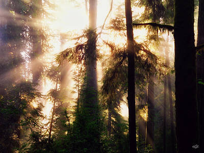 Photograph - Eloquent Redwoods by Leland D Howard