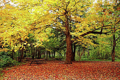Photograph - Elora Gorge Campsite In Fall by Debbie Oppermann