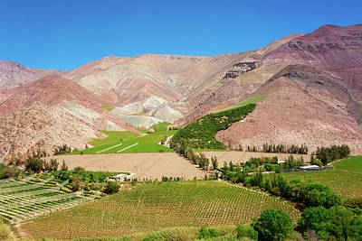 Photograph - Elqui Valley Vineyards by Kent Nancollas
