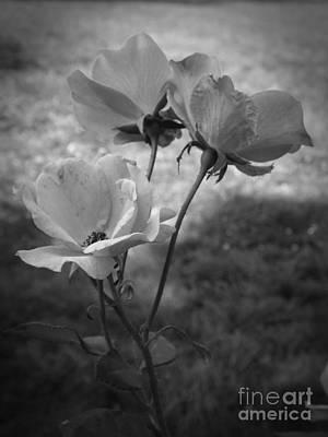 Photograph - Else Paulsen by Sara Raber