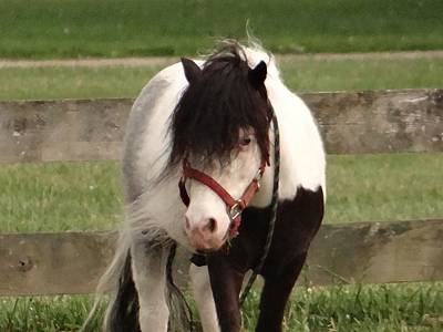 Horse Photograph - Elvis - Spring Stroll by Diane DiMarco