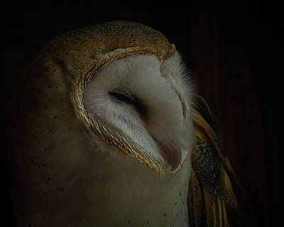 Photograph - Emalees Barn Owl by Ernie Echols