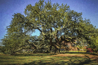 Photograph - Emancipation Oak Tree by Jerry Gammon