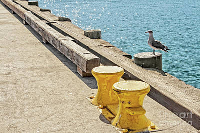 Photograph - Embarcadero Seagull And Yellow Mooring Bitts by Gabriele Pomykaj