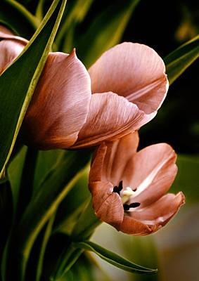 Tulips Digital Art - Embrace by Jessica Jenney