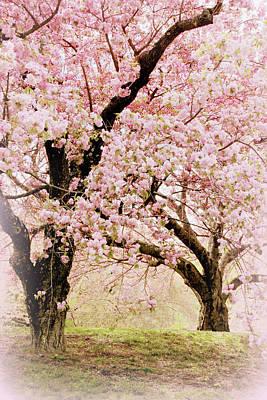 Photograph - Embrace Of Spring by Jessica Jenney