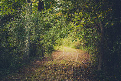 Wetlands Photograph - Embrace The Woods by Shane Holsclaw
