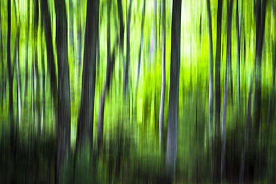 Photograph - Green Forest - North Carolina by Victor Ellison