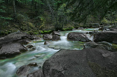 Art Print featuring the photograph Emerald Forest by Tim Reaves