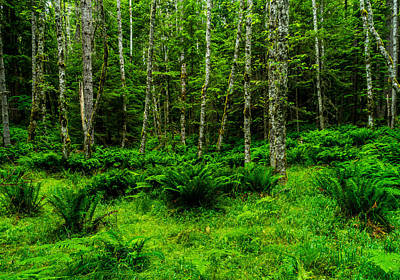 Photograph - Emerald Forest by TL  Mair