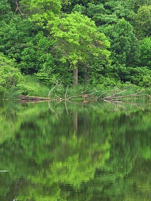 Photograph - Emerald Green Reflections by Lori Frisch