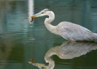 Crawfish Photograph - Emerald Reflection by Fraida Gutovich