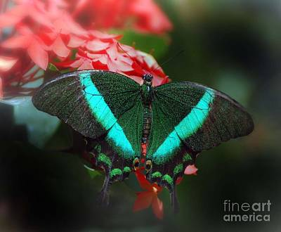 Emerald Swallowtail Original
