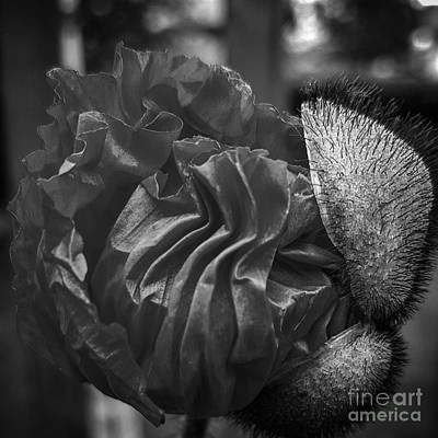 Emergence In Monochrome Art Print by Chalet Roome-Rigdon
