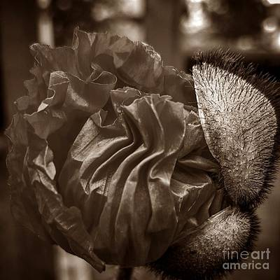 Emergence In Sepia Art Print by Chalet Roome-Rigdon