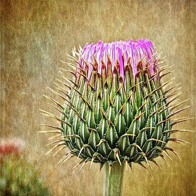 Photograph - Emergence, Milk Thistle Bud by Flying Z Photography by Zayne Diamond