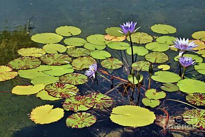 Photograph - Emerging Of Mud - Blue Lotus Blooming by Gabriele Pomykaj