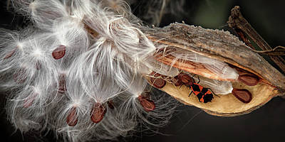 Photograph - Emerging Seeds by Phil Cardamone