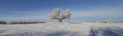 Marker Wall Art - Photograph - Eminija Tree With Hoarfrost by Aaron J Groen