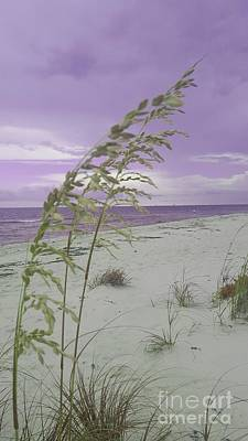 Photograph - Emma Kate's Purple Beach by Rachel Hannah