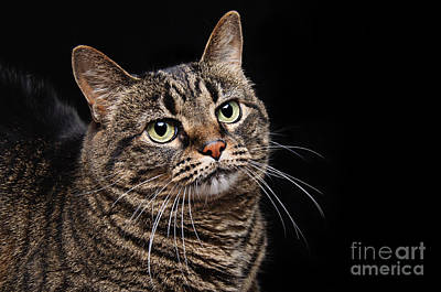 Tabby Cat Photograph - Emmy The Cat Ponder by Andee Design