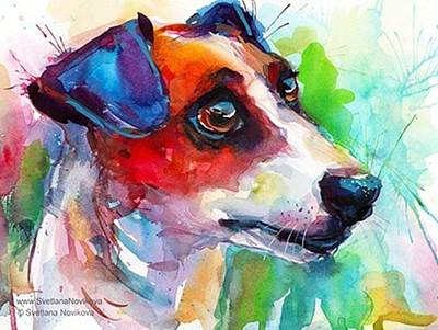 Dog Photograph - Emotional Jack Russell Terrier by Svetlana Novikova