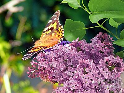Emperor Mixed Media - Emperor Butterfly On Lilac Blossom by Morag Bates