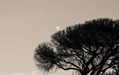 Photograph - Empress Of The Sky by Andrea Mazzocchetti