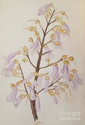 Painting - Empress Tree by Randol Burns