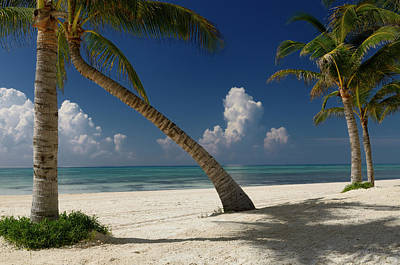 Mexico Photograph - Empty Beach With Coconut Palm Trees In The Mexican Mayan Riviera by Reimar Gaertner