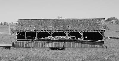 Photograph - Empty Coop by Lawrence Pratt