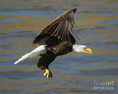 Talons Photograph - Empty Handed by Mike Dawson