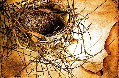 Photograph - Empty Nest by Jan Amiss Photography