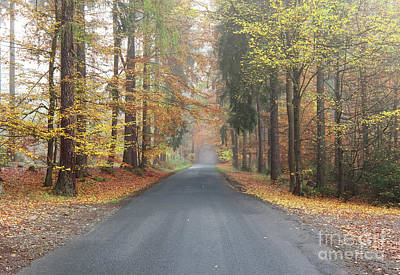 Photograph - Empty Road By An Autumn Forest by Michal Boubin