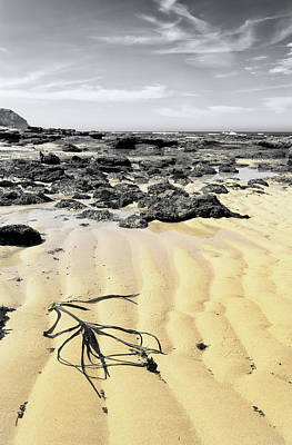 Photograph - Low Tide by Edgar Laureano