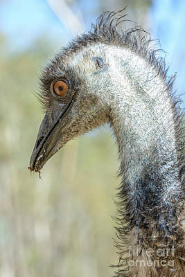 Photograph - Emu 3 by Werner Padarin