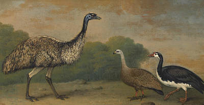 Painting - Emu, Cape Barren Goose And Magpie Goose by Treasury Classics Art