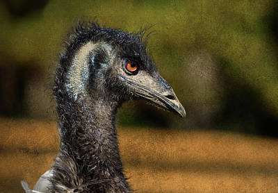 Emu Digital Art - Emu Coming Back To See Me? by Sandi OReilly