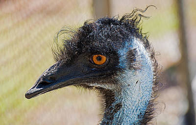 Photograph - Emu by Kenneth Albin