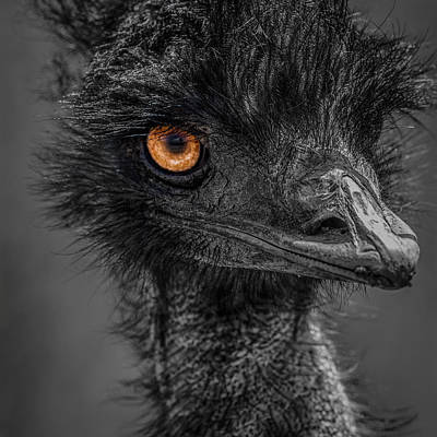 Emu Print by Paul Freidlund