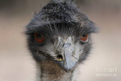 Emu Art Print by Roo Printz