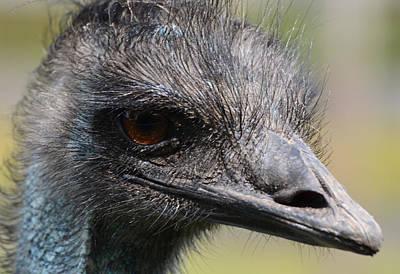 Emu Digital Art - Emu - Up Close And Personal by Richard Andrews