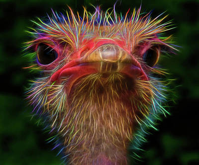 Alternative Digital Art - Emu You by Mac Titmus