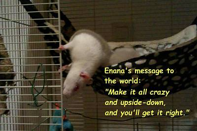 Photograph - Enana's Message To The World by Nieve Andrea